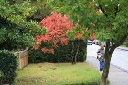 2009-10-14 11-12-12_1.JPG